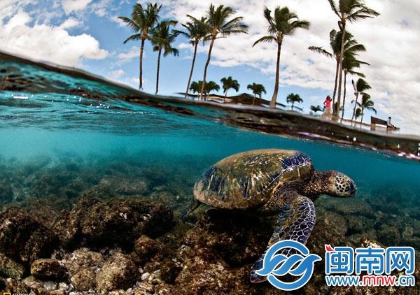 海龟湾,全球大陆架上唯一的海龟自然保护区